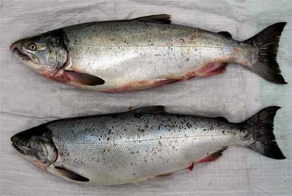 Відео про домашніх риб